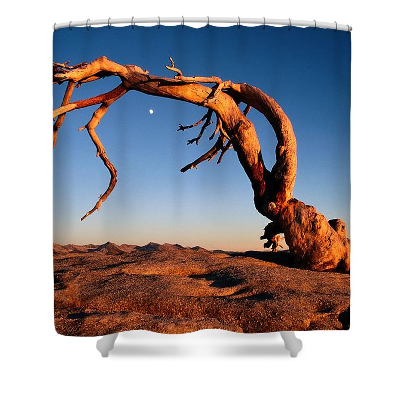 Sentinel Dome Shower Curtain featuring the photograph Twilight View Of A Jeffrey Pine Tree by Phil Schermeister