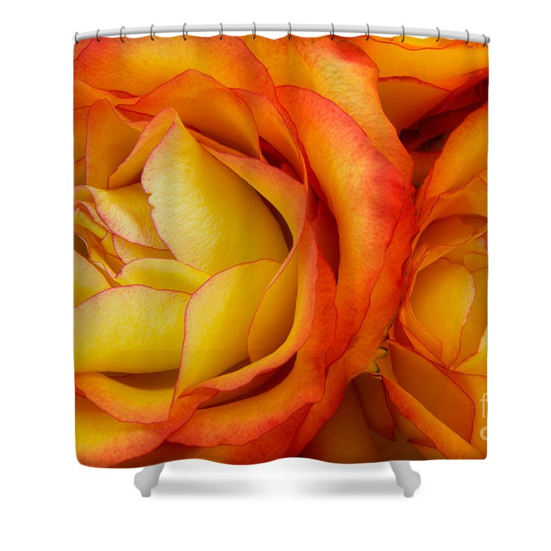 Rose Shower Curtain featuring the photograph Twin Yellow Roses by Ann Garrett