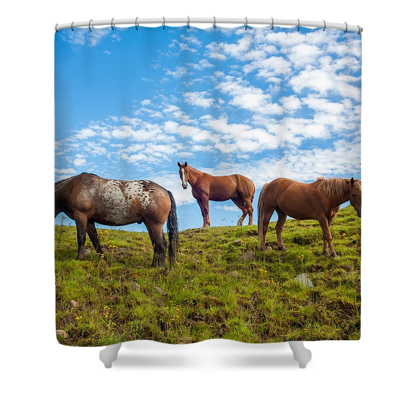 Animal Shower Curtain featuring the photograph Two Quarters And An Appaloosa by Semmick Photo