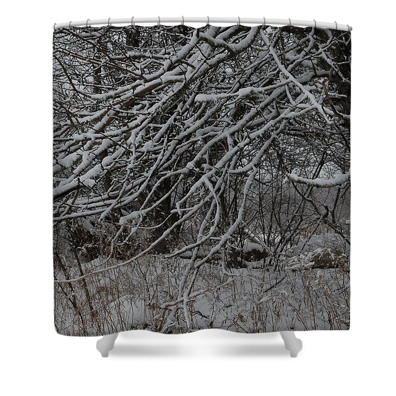 Tree Shower Curtain featuring the photograph Under The Old Apple Tree by Susan Capuano
