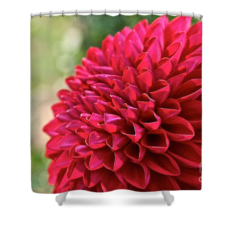 Outdoors Shower Curtain featuring the photograph Unnamed Dahlia 4001 by Susan Herber