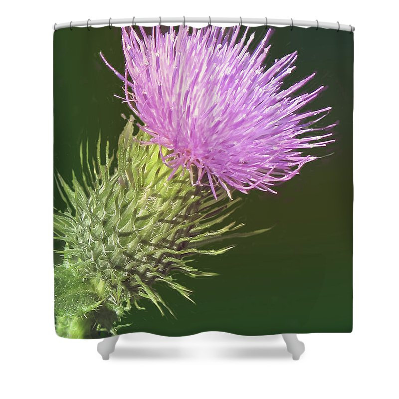 Flower Shower Curtain featuring the photograph Uplifting by Ian MacDonald