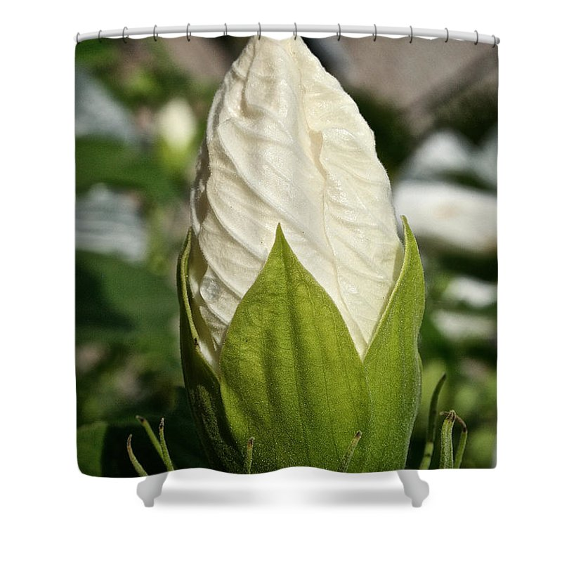 Outdoors Shower Curtain featuring the photograph Vanilla Hibiscus by Susan Herber