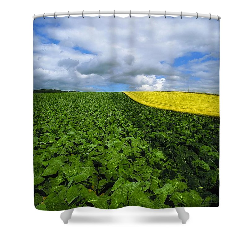 Countryside Shower Curtain featuring the photograph Vegetables, Cabbages by The Irish Image Collection
