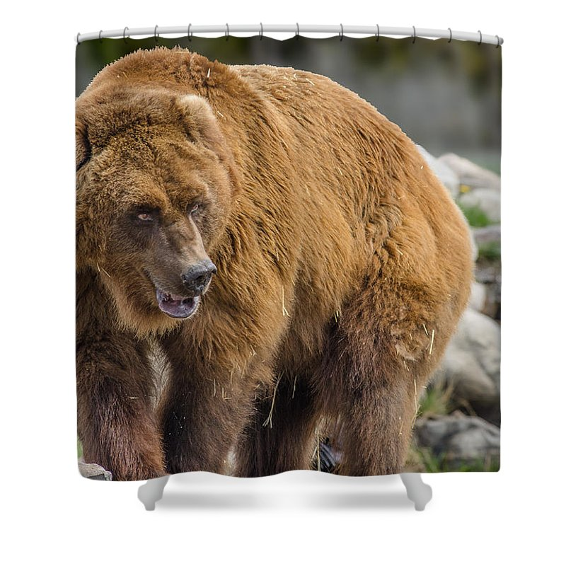 Grizzly Brown Bear Forest Scene Bathroom Shower Curtain Polyester