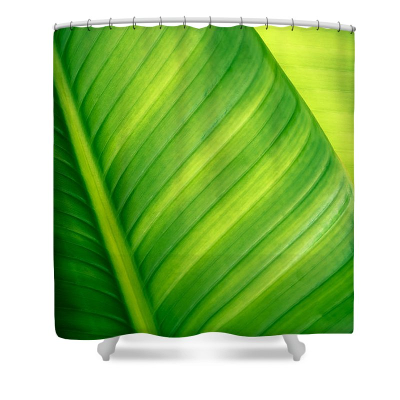 Abstract Shower Curtain featuring the photograph Vibrant Green Leaf by Joe Carini - Printscapes