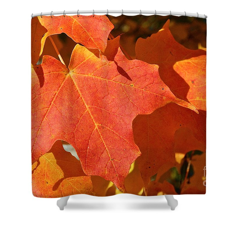 Outdoors Shower Curtain featuring the photograph Vibrant Maple by Susan Herber