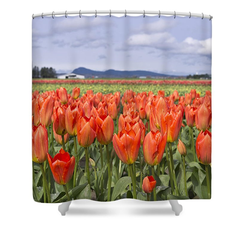 Tulip Shower Curtain featuring the photograph Vibrant Orange Spring by Priya Ghose