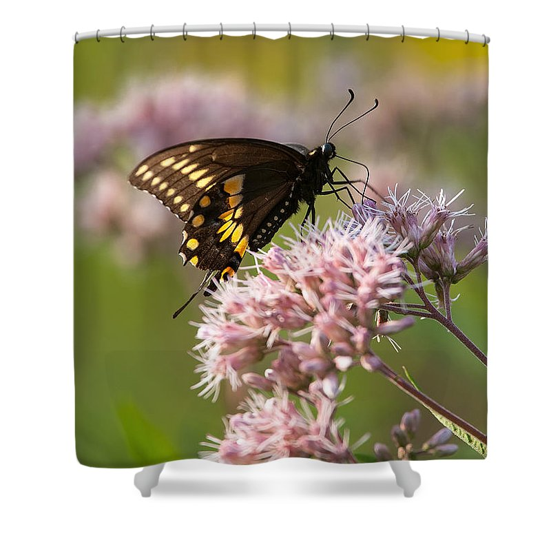 Butterfly Shower Curtain featuring the photograph Victuals by Dale Kincaid