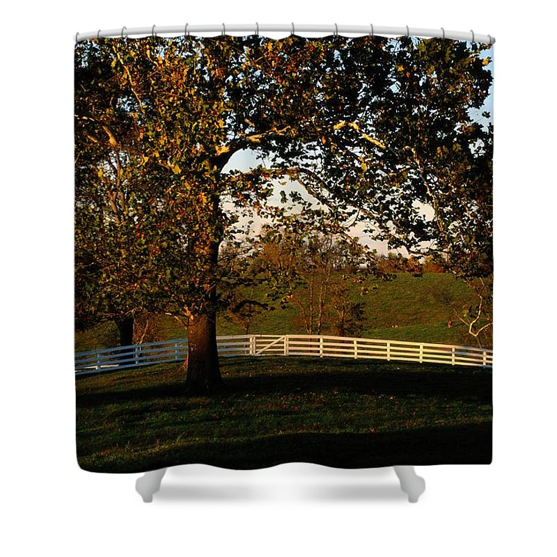 Pleasant Hill Shower Curtain featuring the photograph View Of A Large Sycamore Tree And White by Raymond Gehman