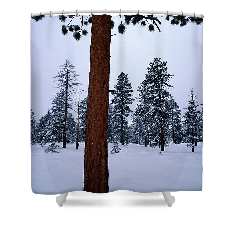 Ponderosa Pine Trees Shower Curtain featuring the photograph View Of A Ponderosa Pine Surrounded by Raymond Gehman