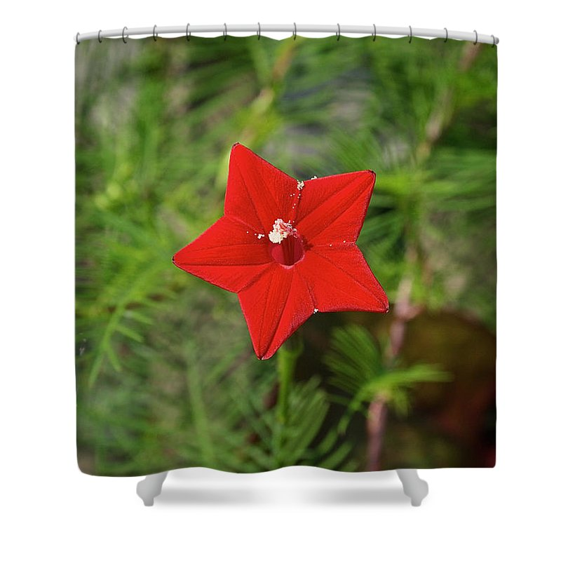 Outdoors Shower Curtain featuring the photograph Vivid Star by Susan Herber