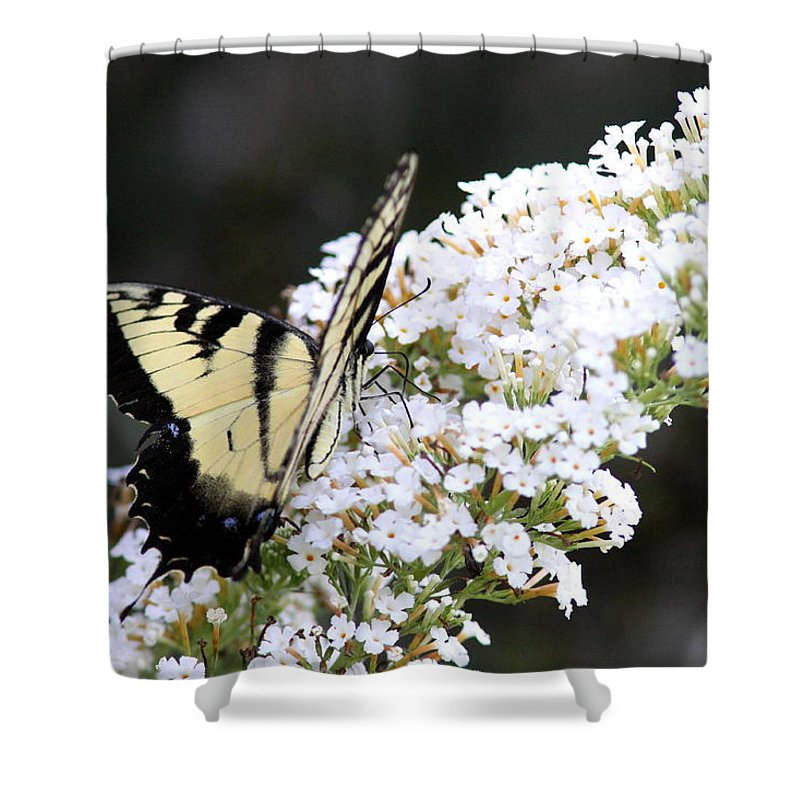 Swallowtail Butterfly Shower Curtain featuring the photograph Walking Uphill by Travis Truelove