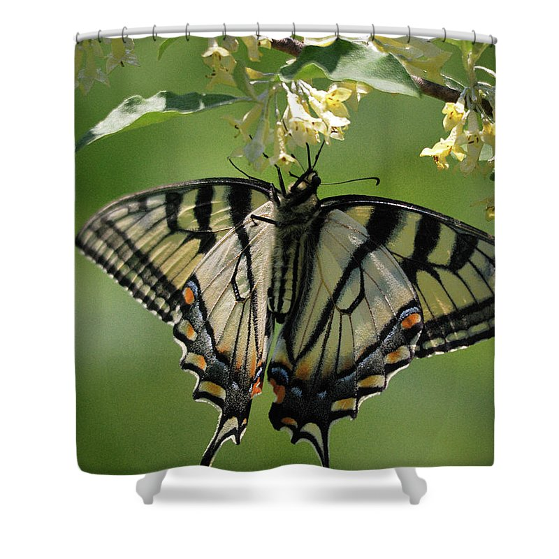 Nature Shower Curtain featuring the photograph Warpaint by Susan Capuano