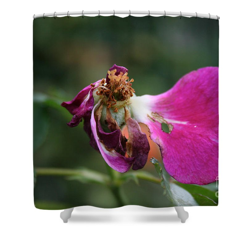 Outdoors Shower Curtain featuring the photograph Warrior Rose by Susan Herber
