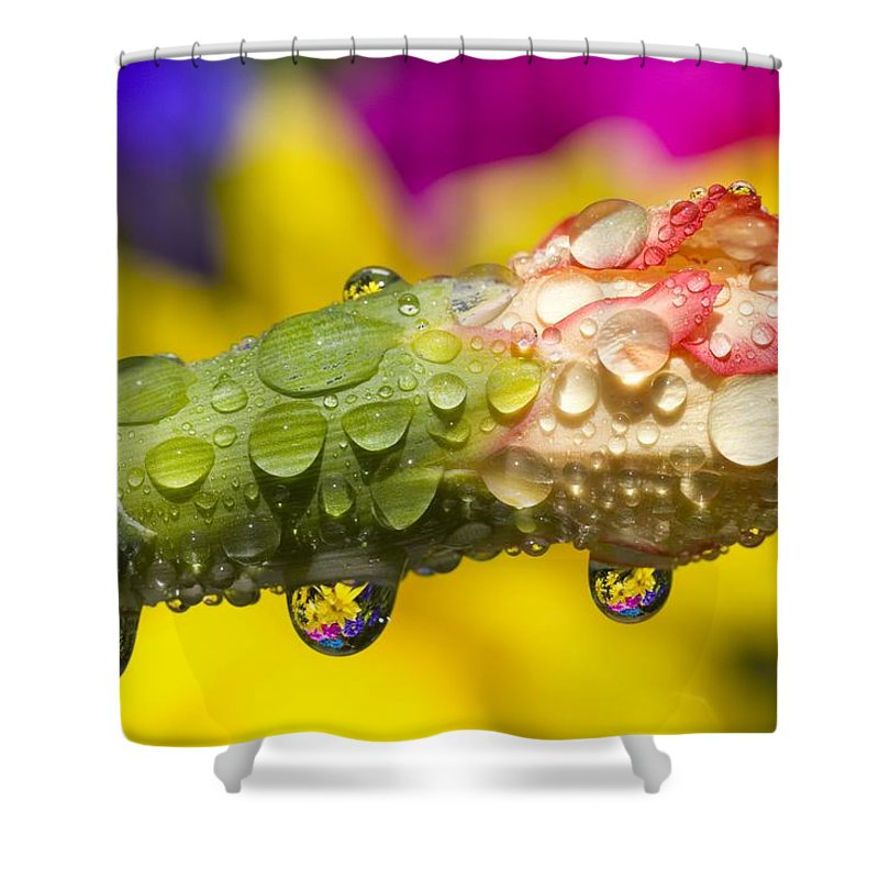 Budding Shower Curtain featuring the photograph Water Drops On A Budding Flower by Craig Tuttle