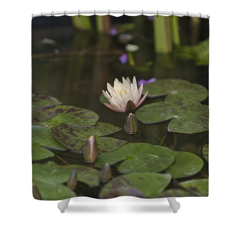 Rhs Shower Curtain featuring the photograph Water-lily by Maj Seda