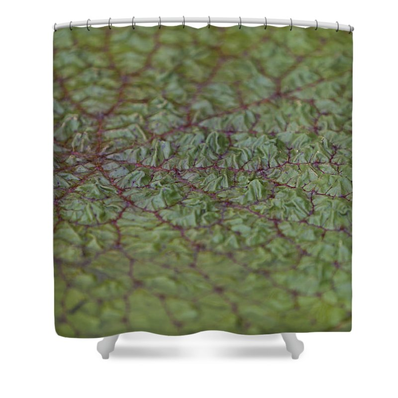 Rhs Shower Curtain featuring the photograph Water Plant by Maj Seda