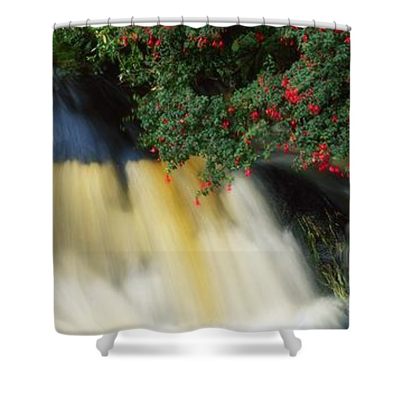 Fuschia Shower Curtain featuring the photograph Waterfall And Fuschia, Ireland by The Irish Image Collection