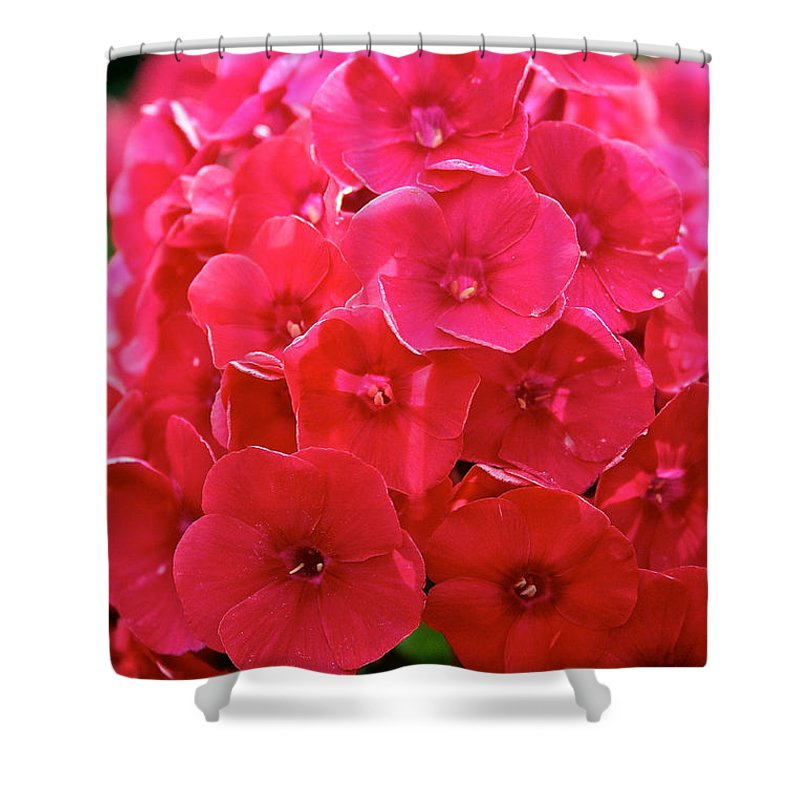 Plant Shower Curtain featuring the photograph Watermelon Punch by Susan Herber
