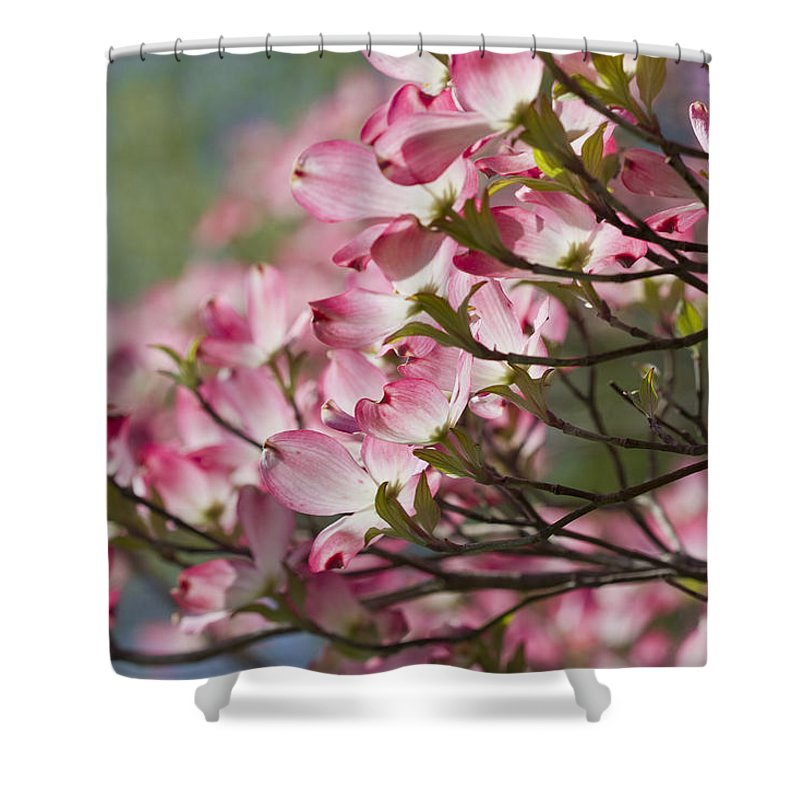 Pink Dogwood Shower Curtain featuring the photograph Waves Of Pink Light by Kathy Clark