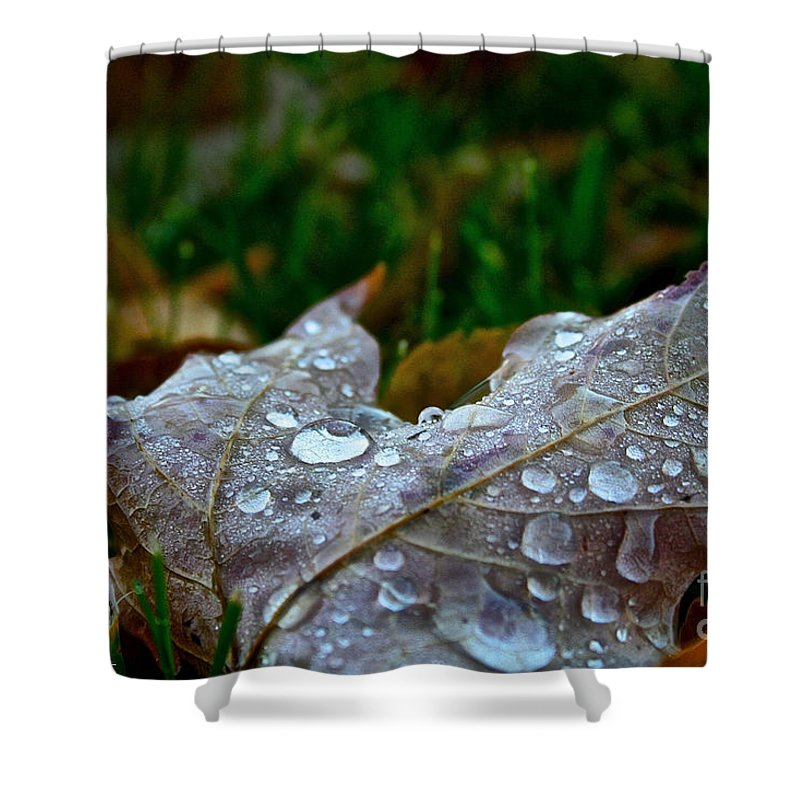 Outdoors Shower Curtain featuring the photograph Wet Leaf by Susan Herber