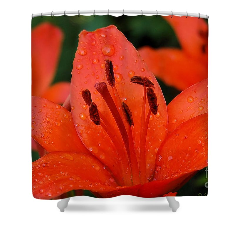 Flower Shower Curtain featuring the photograph Wet On Red by Susan Smith