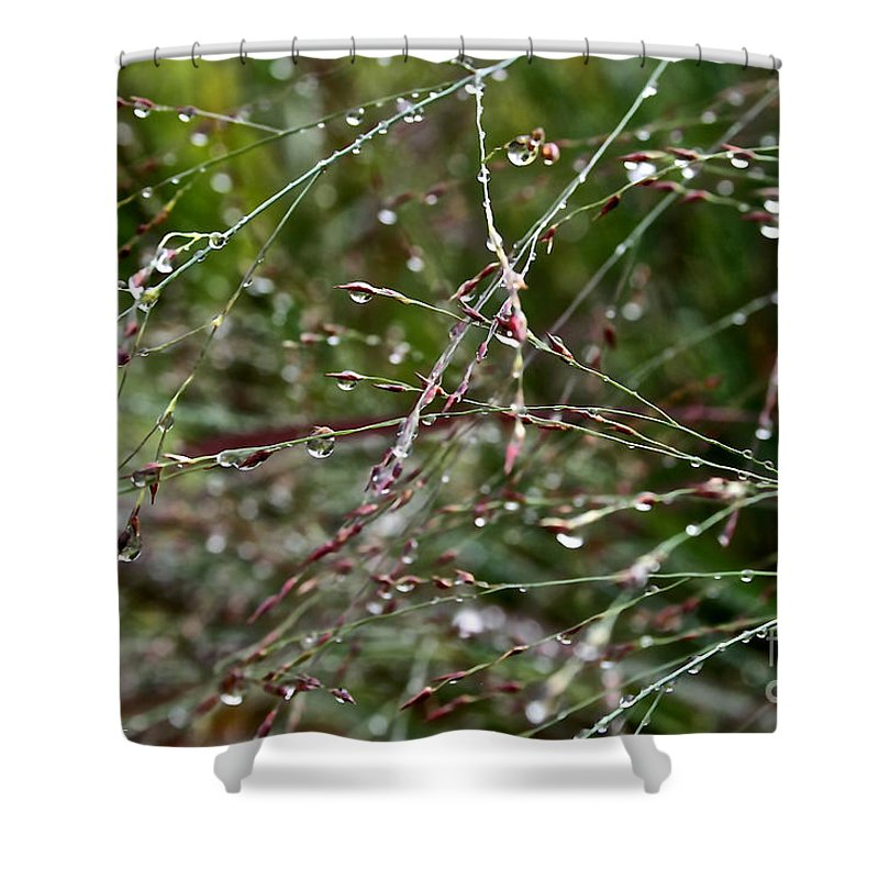 Outdoors Shower Curtain featuring the photograph Wet by Susan Herber