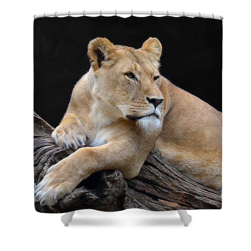 Mug Shower Curtain featuring the digital art What Is Over There by Eva Kaufman