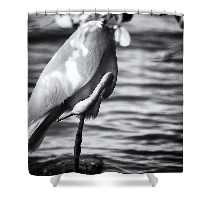 White Crane Shower Curtain featuring the photograph What Is That Back There by Roger Wedegis