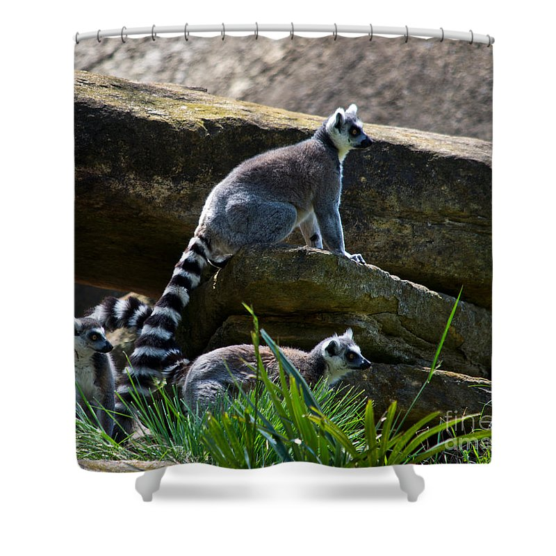 Lima Shower Curtain featuring the photograph What Is That by Scott Hervieux