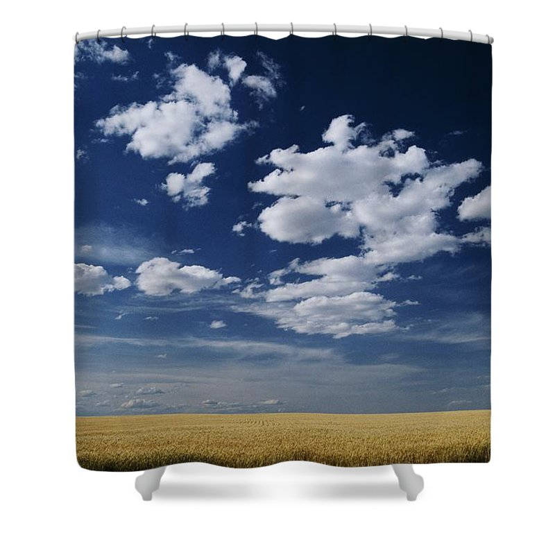 Wheat Fields Shower Curtain featuring the photograph Wheat Field, Central Washington by Michael Klesius