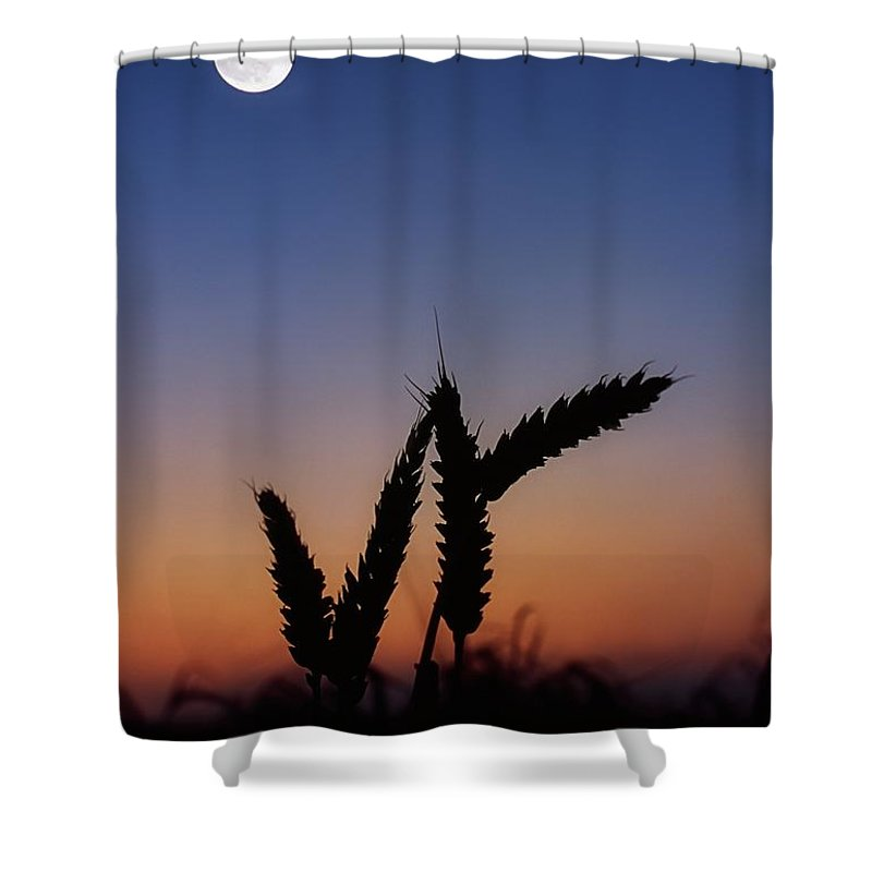 Close Up Shower Curtain featuring the photograph Wheat, Harvest Moon by The Irish Image Collection