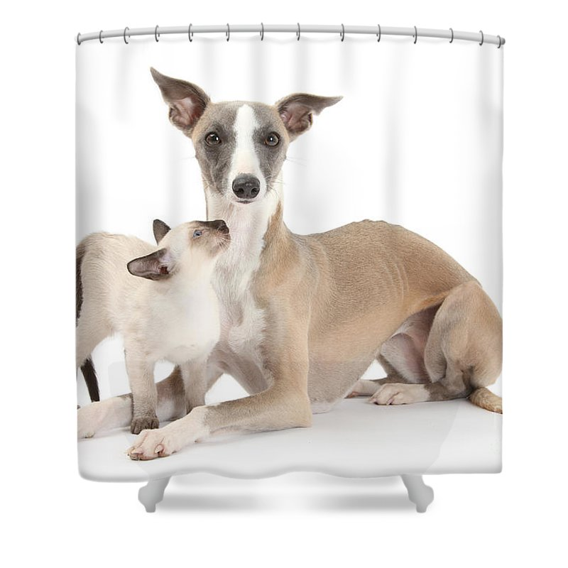 Animal Shower Curtain featuring the photograph Whippet And Siamese Kitten by Mark Taylor