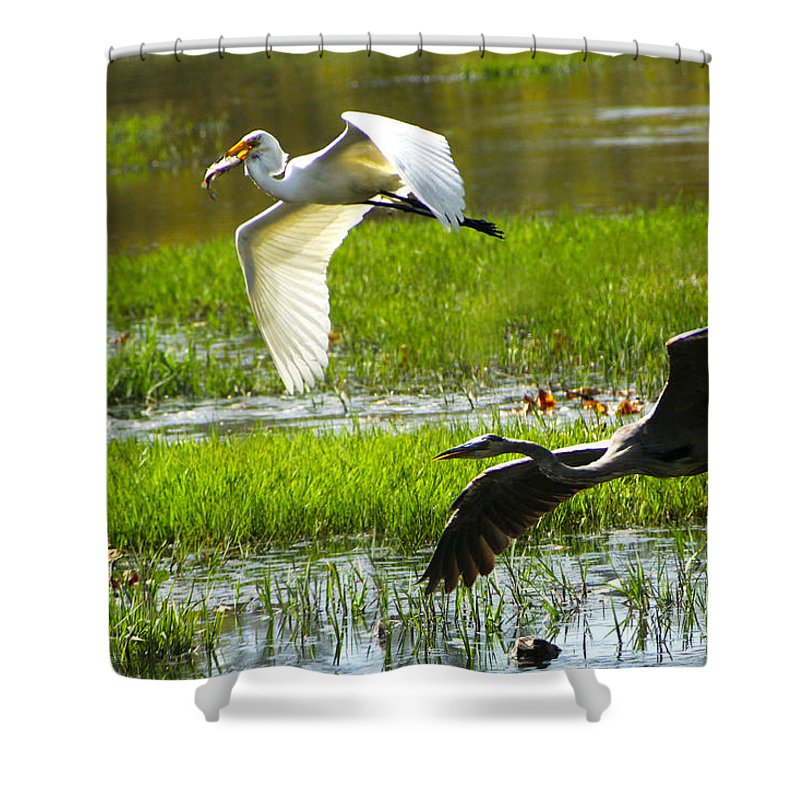 Egrets Shower Curtain featuring the photograph White And Grey Herons In Flight by Diana Haronis