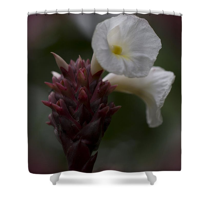 White Shower Curtain featuring the photograph White Bromeliad Flowers by Douglas Barnard