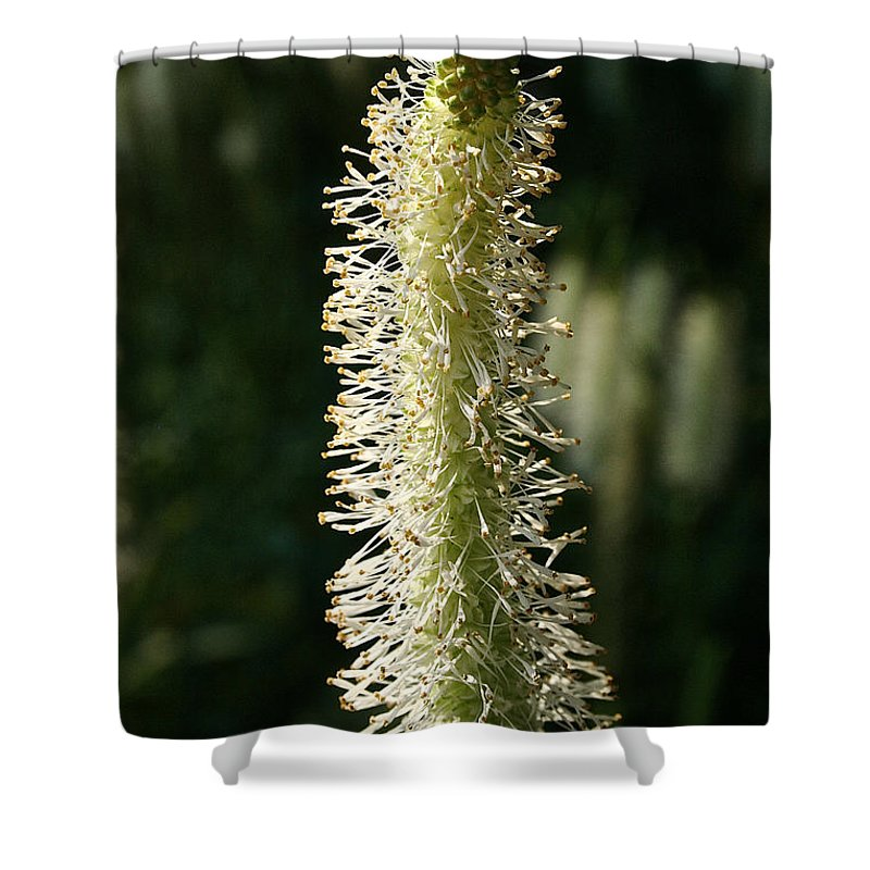 Outdoors Shower Curtain featuring the photograph White Canadian Burnet by Susan Herber