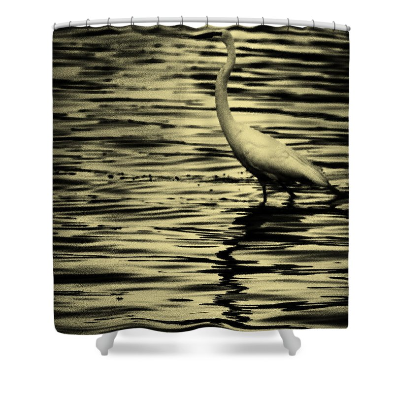 White Crane Shower Curtain featuring the photograph White Crane by Roger Wedegis
