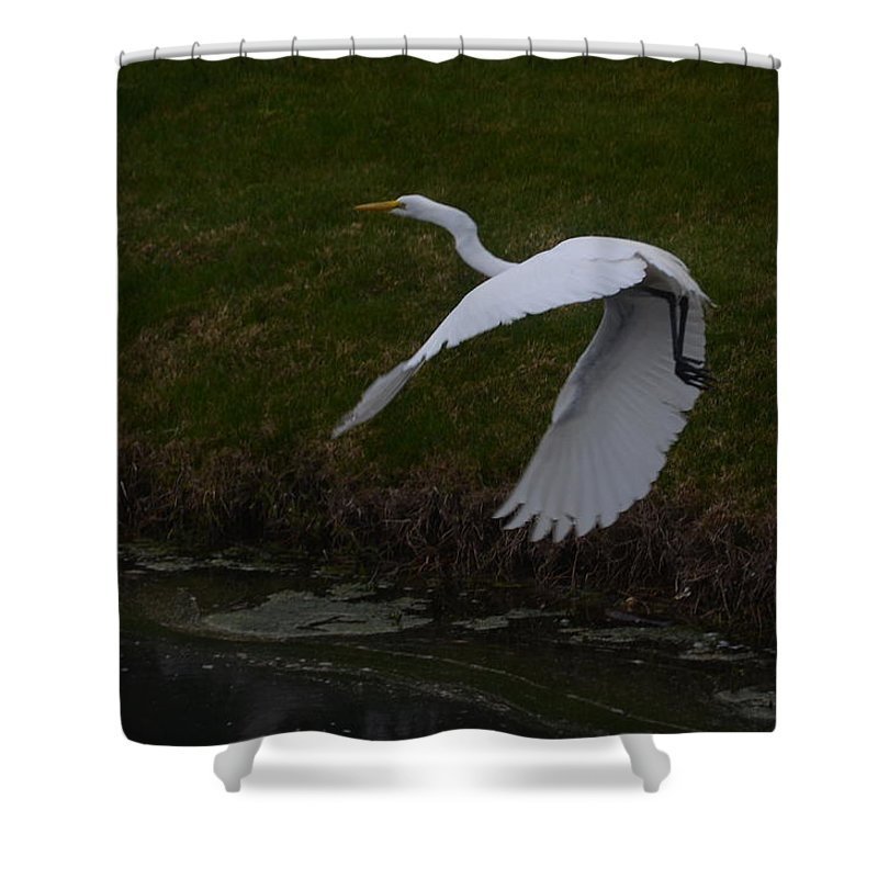 Egret Shower Curtain featuring the photograph White Egret by Randy J Heath
