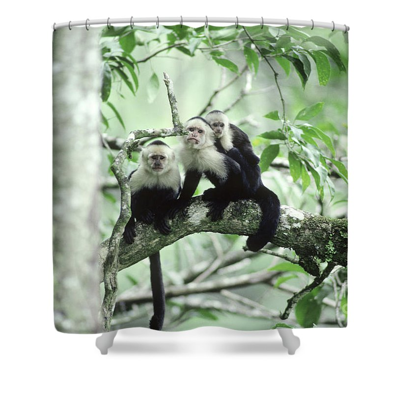 Fauna Shower Curtain featuring the photograph White-faced Capuchins by Gregory G Dimijian MD