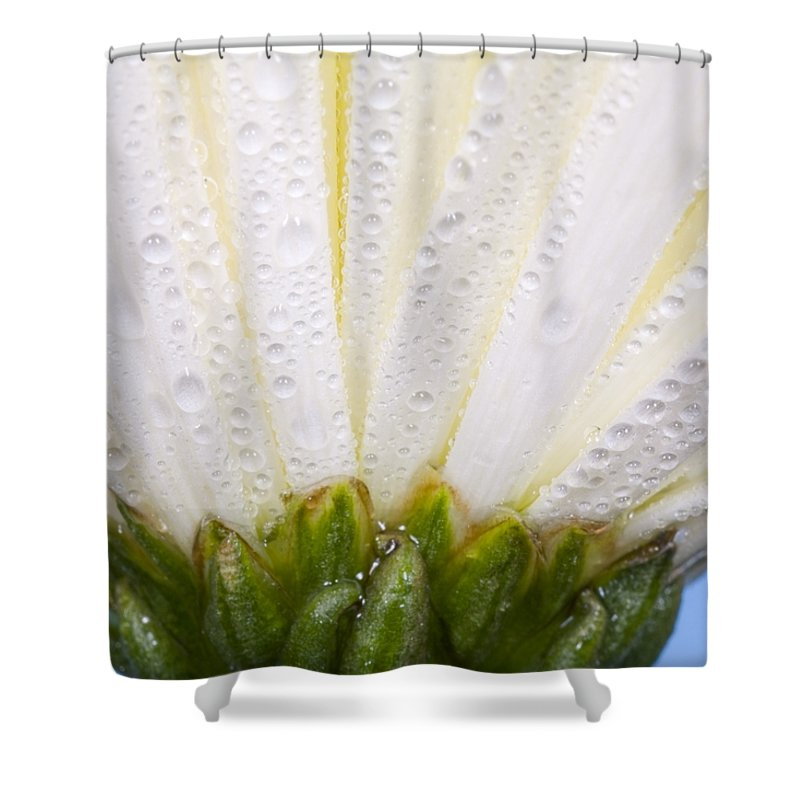 Color Image Shower Curtain featuring the photograph White Flower Head With Dew by Craig Tuttle