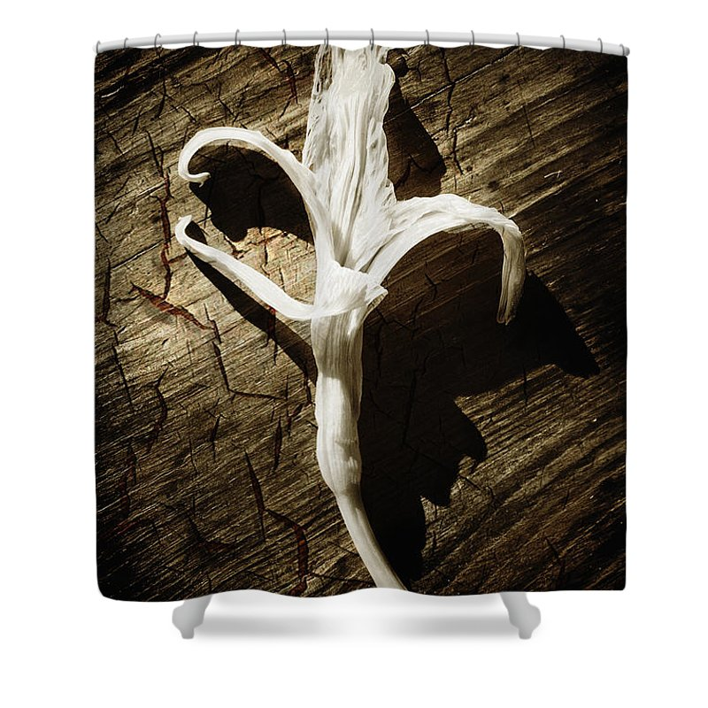 Age Shower Curtain featuring the photograph White Flower by Skip Nall