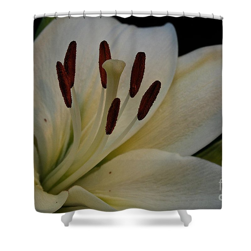 Outdoors Shower Curtain featuring the photograph White Knight by Susan Herber