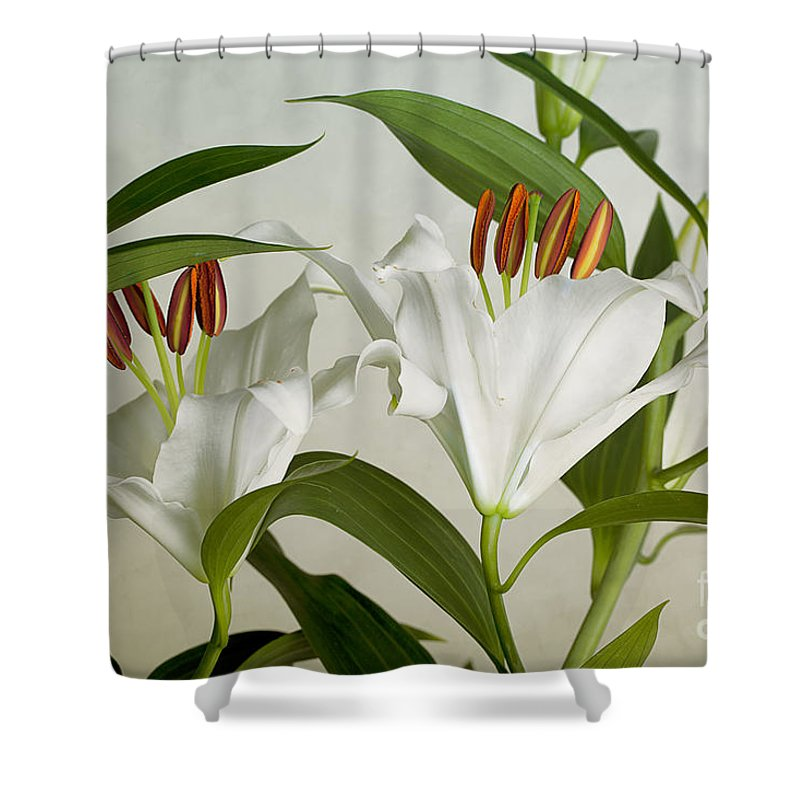 Lily Shower Curtain featuring the photograph White Lilies by Nailia Schwarz