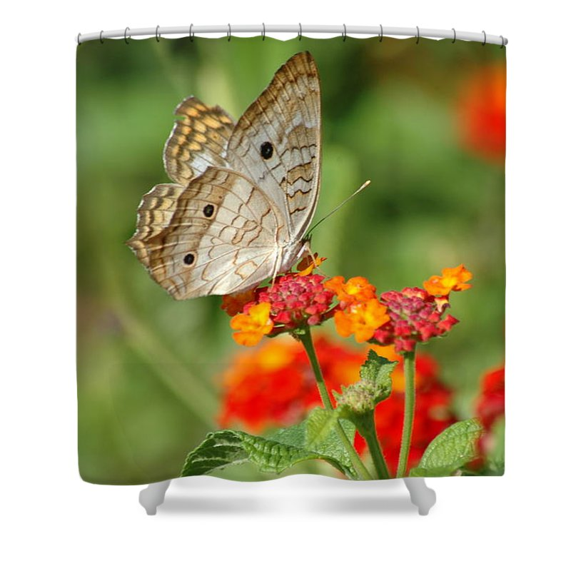 Butterfly Shower Curtain featuring the photograph White Peacock Butterfly by Carolyn Marshall
