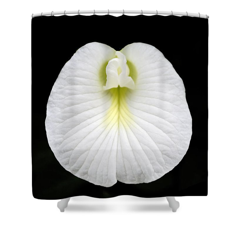 Flower Shower Curtain featuring the photograph White Pearl Flower by Sumit Mehndiratta
