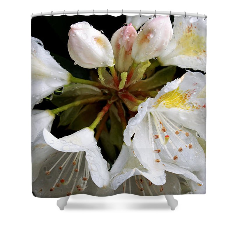 Raindrops Shower Curtain featuring the photograph White Rhododendron Blooms by Mel Hensley