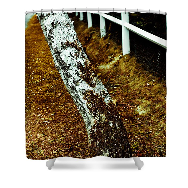 Tree Shower Curtain featuring the photograph White Tree by Olivier De Rycke
