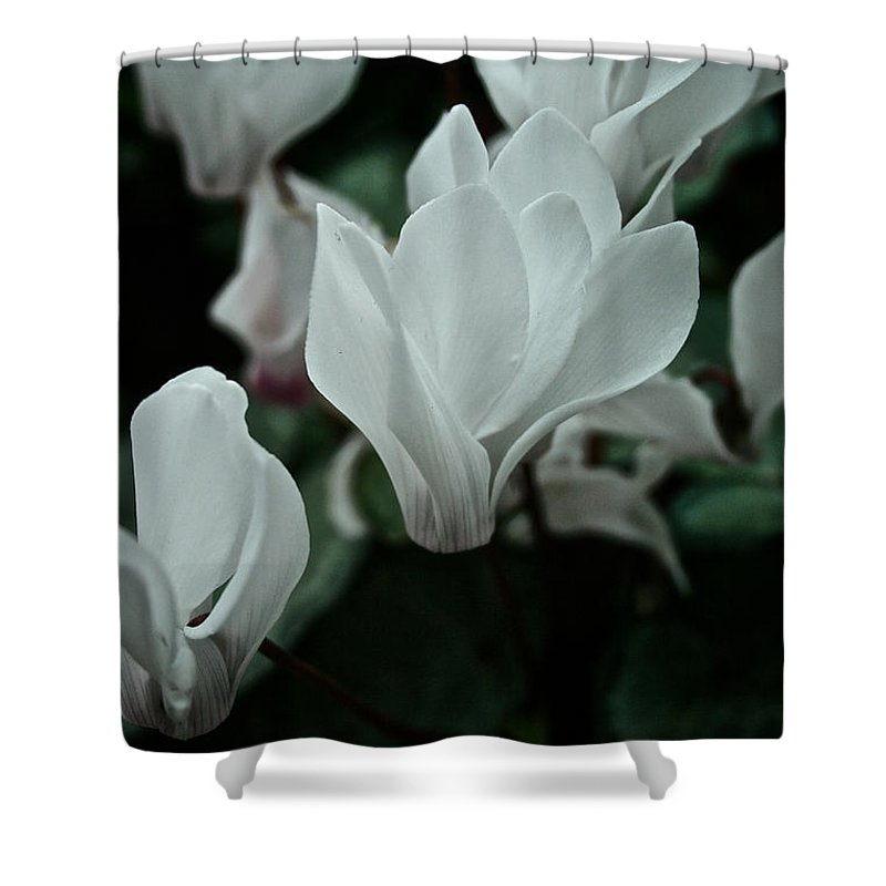 Tropical Plant Shower Curtain featuring the photograph White Wonder by Susan Herber