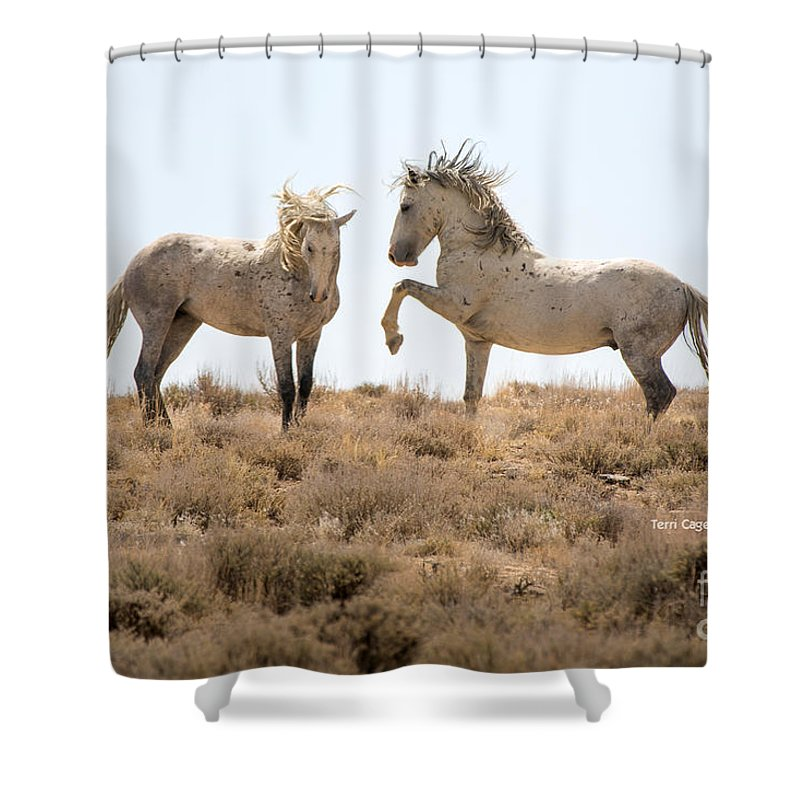 Horse Shower Curtain featuring the photograph Wild Horse Disagreement by Terri Cage
